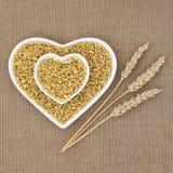 Kamut Khorasan Wheat Stock Image