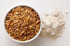 Kamut wheat kernels Stock Images