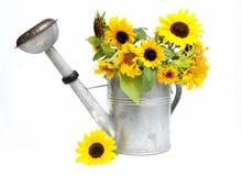 kan att bevattna för solrosor royaltyfria foton