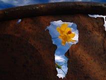 kan blomma den rostiga avskrädet Arkivbilder