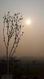 Kan boom en zonneschijn. Stock Foto