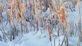 Kan de extreme koude in de ochtend voelen stock foto's
