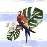 Kan de patroon mooie tropische papegaai, als druk op de stof worden gebruikt vector illustratie
