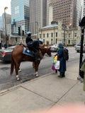 Kan ik de paardneus raken? stock foto