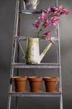 kan metal att bevattna för orchidsstepladder Arkivbild