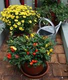 kan peppra att bevattna för växt Royaltyfria Bilder