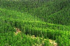 kan skogen se t-trees Arkivfoton
