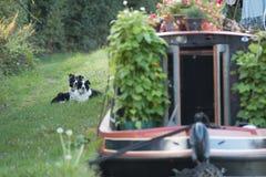 Kanałowi psy zdjęcie royalty free