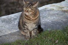 kanałowy kot Fotografia Royalty Free