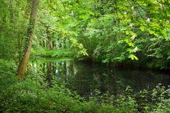 Kanał w Stochemhoeve lasu parku Obrazy Stock