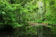 Kanał w Stochemhoeve lasu parku Obrazy Royalty Free