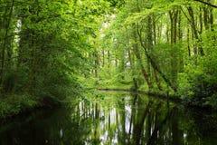 Kanał w Stochemhoeve lasu parku Fotografia Stock