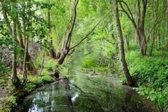 Kanał w Stochemhoeve lasu parku Zdjęcie Royalty Free