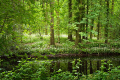 Kanał w Stochemhoeve lasu parku Obraz Stock