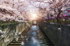 Kanaal van kersen het bloesem gevoerde Meguro in Tokyo, Japan De lente in April in Tokyo, Japan stock foto