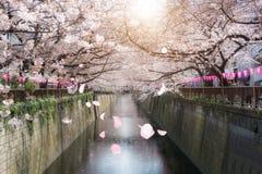 Kanaal van kersen het bloesem gevoerde Meguro in Tokyo, Japan De lente in April in Tokyo, Japan royalty-vrije stock fotografie