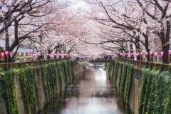 Kanaal van kersen het bloesem gevoerde Meguro in Tokyo, Japan De lente in April in Tokyo, Japan royalty-vrije stock foto's