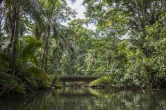 Kanaalwaterweg met Palmen Royalty-vrije Stock Afbeelding