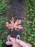Kanada Royaltyfria Bilder