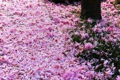 Kanada blommor Royaltyfria Bilder