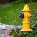 Kanada brandposttoronto yellow royaltyfri bild