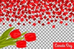 Kanada dagbakgrund med lönnblad och tulpan för 1st av Juli beröm på genomskinlig bakgrund stock illustrationer