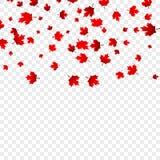 Kanada dnia liści klonowych tło Spada czerwień opuszcza dla Kanada dnia 1st Lipiec Obrazy Royalty Free