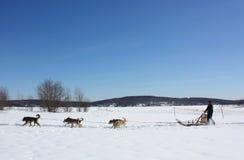 Kanada dogs dess musherlag Royaltyfria Foton