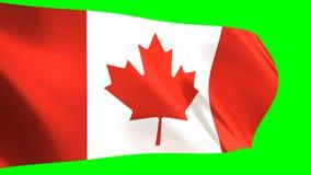 Kanada fahnenschwenkend