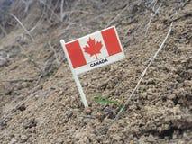 Kanada flagga Arkivbild
