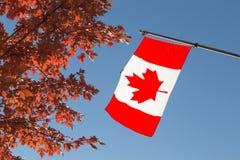 Kanada flagga och lönnträd royaltyfria foton