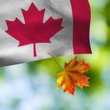 Kanada flagga på grön bakgrund Royaltyfri Foto