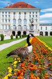 Kanada gås framme av det Nymphenburg slottet royaltyfri bild