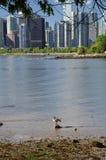Kanada gąska fotografia royalty free