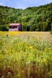 Kanada - nära Mont-Tremblant, blommafält royaltyfri fotografi