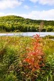 Kanada - nära Mont-Tremblant, lös blomma royaltyfri bild