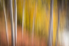 Kanadensare Forest Blur fotografering för bildbyråer