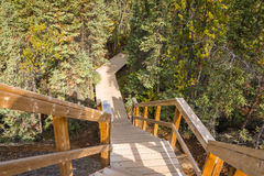 Kanadensare Forest Trail arkivfoto