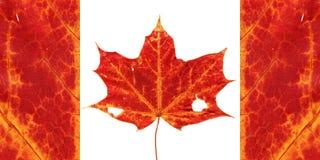 kanadensisk flagga Vektor Illustrationer