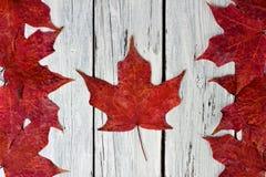 Kanadensisk flagga av röda lönnlöv över ridit ut vitt trä royaltyfri fotografi
