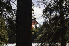 Kanadensisk flagga i Banff Fotografering för Bildbyråer