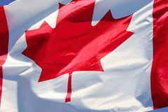 Kanadensisk flagga i vinden Arkivbilder