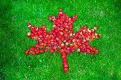 Kanadensisk flagga med lönnlövet som göras av jordgubbar på en grön gräsmatta för att fira den Kanada dagen Arkivbilder