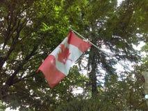 Kanadensisk flagga som försiktigt vinkar royaltyfri fotografi