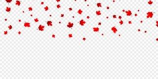 Kanadensisk lönnlövbakgrund Fallande röda sidor för den Kanada dagen 1st Juli Royaltyfri Fotografi