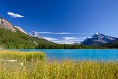 Kanadensisk liggande. Banff nationalpark fotografering för bildbyråer