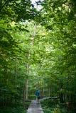Kanadensisk skog i morgonen fotografering för bildbyråer