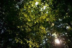 Kanadensisk skog i morgonen royaltyfri bild