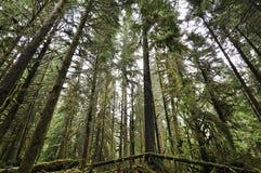 Kanadensisk skog med mossa Royaltyfri Bild