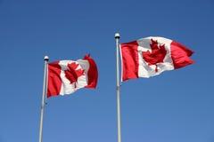 kanadensiska flaggor arkivbild